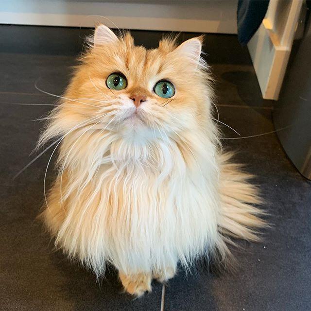 Instagramın en çok takip edilen fenomen kedileri